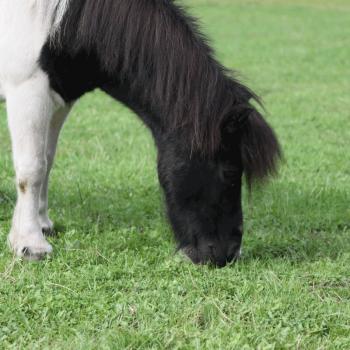 Blümchen auf dem Hof PonyGlück
