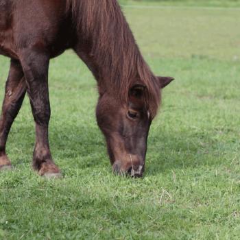 Franzi auf dem Hof PonyGlück