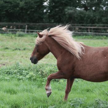Liselotte auf dem Hof PonyGlück